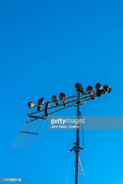 Low Angle View Of Birds Perching On Antenna Against Clear Blue Sky