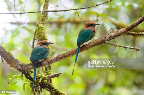 low angle view of birds perching on branches - marek stefunko stock photos and pictures