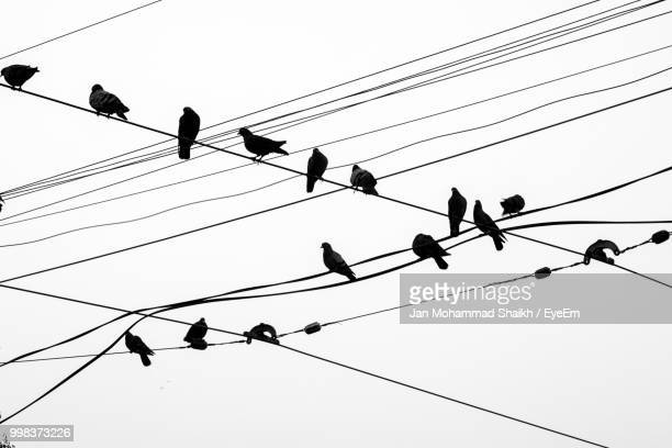 low angle view of birds perching on cable against sky - perching stock photos and pictures