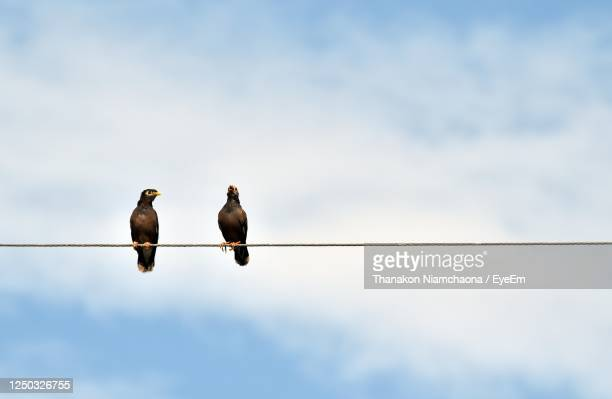 low angle view of birds perching on cable - two animals stock pictures, royalty-free photos & images