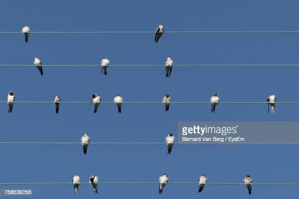 Low Angle View Of Birds Perching On Cables Against Clear Blue Sky During Sunny Day