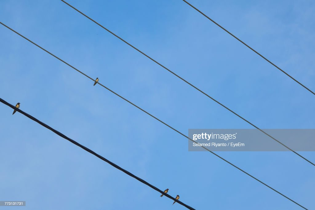 Low Angle View Of Birds Perching On Cables Against Clear Blue Sky : Photo