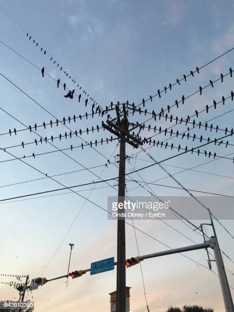 low angle view of birds perching on cables against sky during sunset - perching stock pictures, royalty-free photos & images