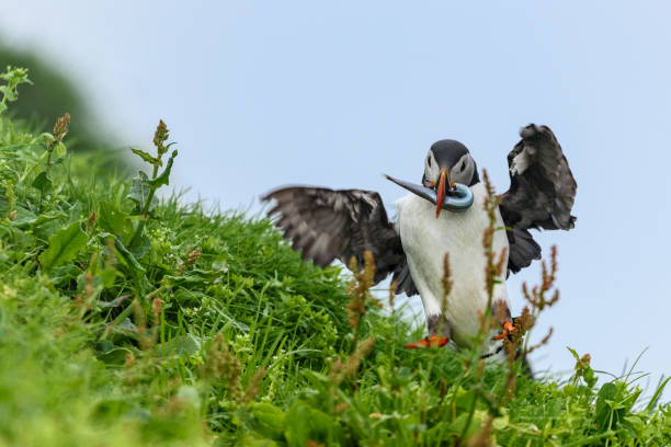 Low angle view of birds perching on grassy field against clear sky