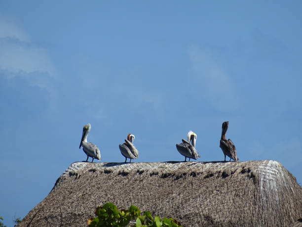 Low Angle View Of Birds Perching On Hut