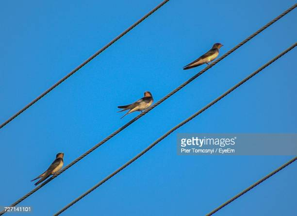Low Angle View Of Birds Perching On Power Line