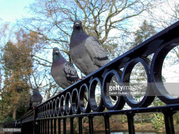 low angle view of birds perching on railing against trees - hutton stock photos and pictures