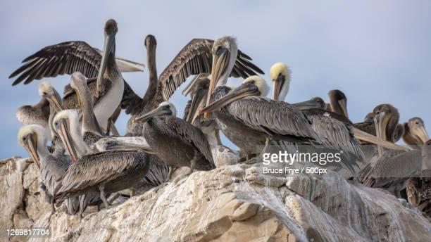 low angle view of birds perching on rock formation, santa cruz, united states - western usa stock pictures, royalty-free photos & images
