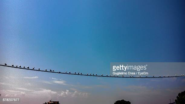 Low Angle View Of Birds Perching On Rope Against Sky