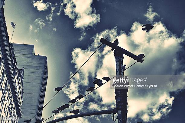 Low Angle View Of Birds Perching On Telephone Pole In City Against Sky