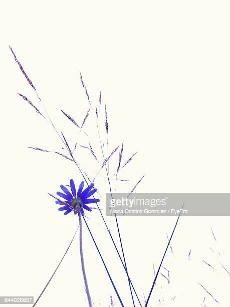 Low Angle View Of Blue Flower In Field Against Clear Sky
