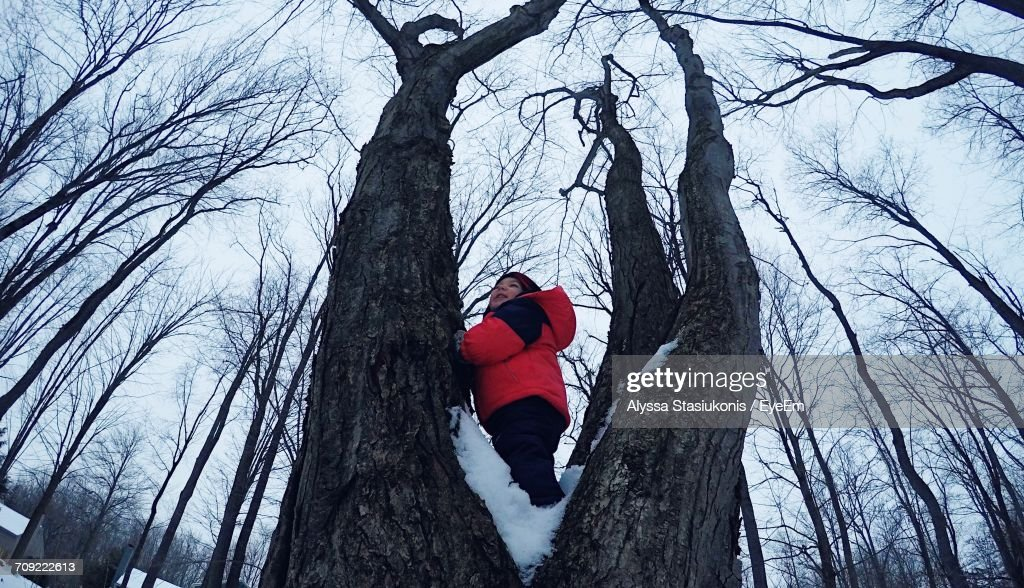 Low Angle View Of Boy Playing On Bare Tree During Winter : Stock Photo