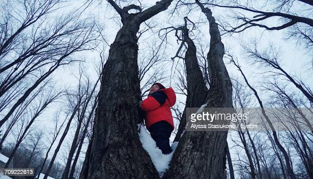 Low Angle View Of Boy Playing On Bare Tree During Winter
