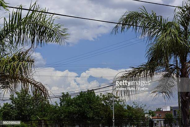 low angle view of branches against sky - andres ruffo stock pictures, royalty-free photos & images