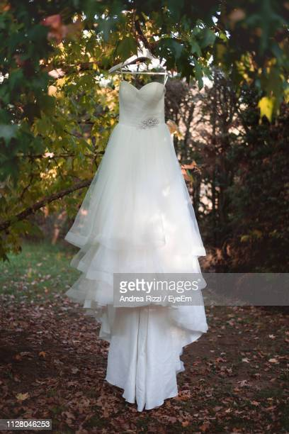 Low Angle View Of Bride Dress Hanging On Tree