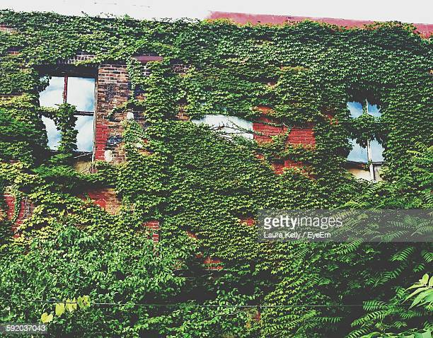 low angle view of building covered in overgrown ivy - laura cover stock pictures, royalty-free photos & images