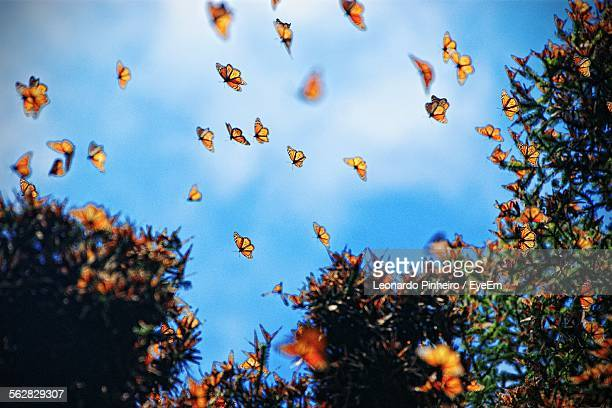 low angle view of butterflies flying by trees against sky - group of animals stock pictures, royalty-free photos & images
