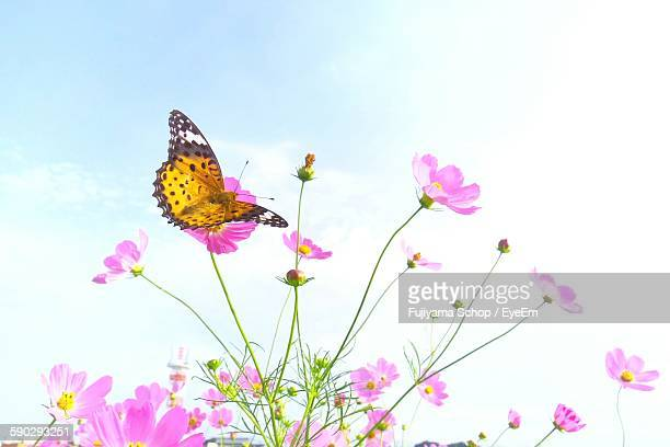 Low Angle View Of Butterfly Flying By Fresh Pink Flowers Against Sky