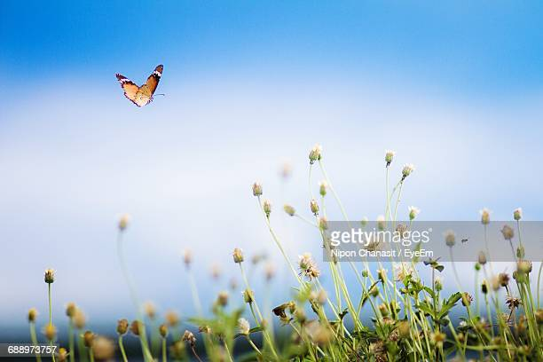 Low Angle View Of Butterfly Flying Over Flowers Against Sky