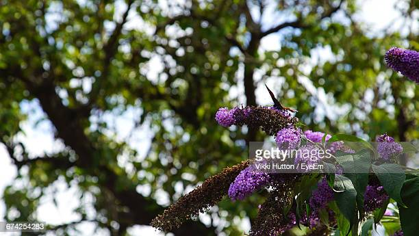 Low Angle View Of Butterfly On Flowers