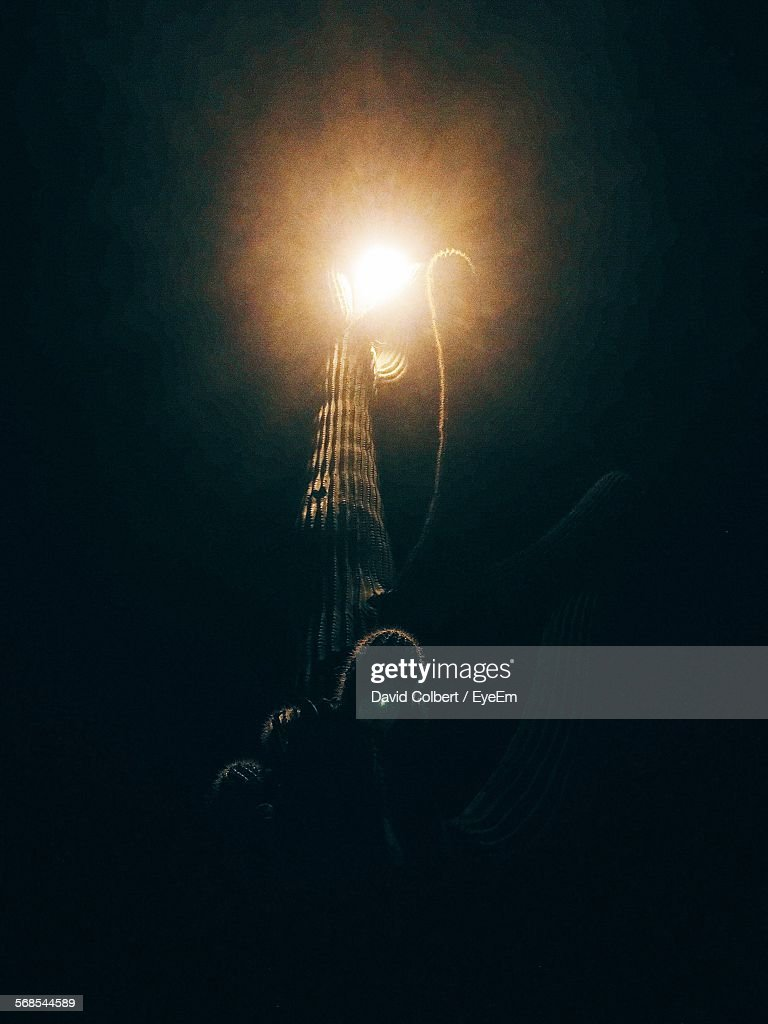 Low Angle View Of Cactus By Illuminated Street Light At Night : Stock Photo