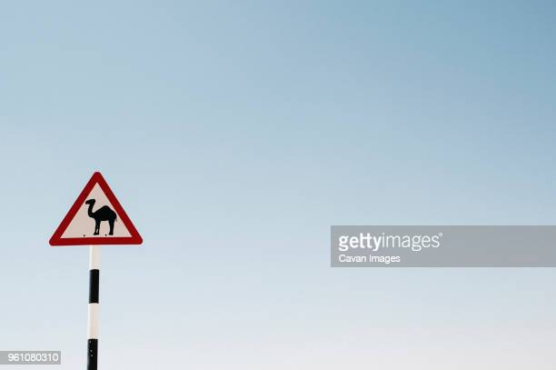 Low angle view of camel crossing sign against clear sky