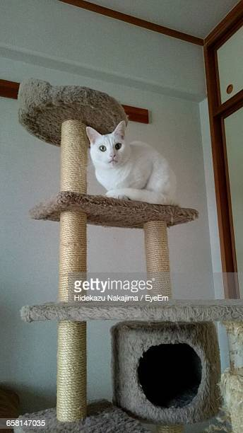 Low Angle View Of Cat On Scratching Post At Home