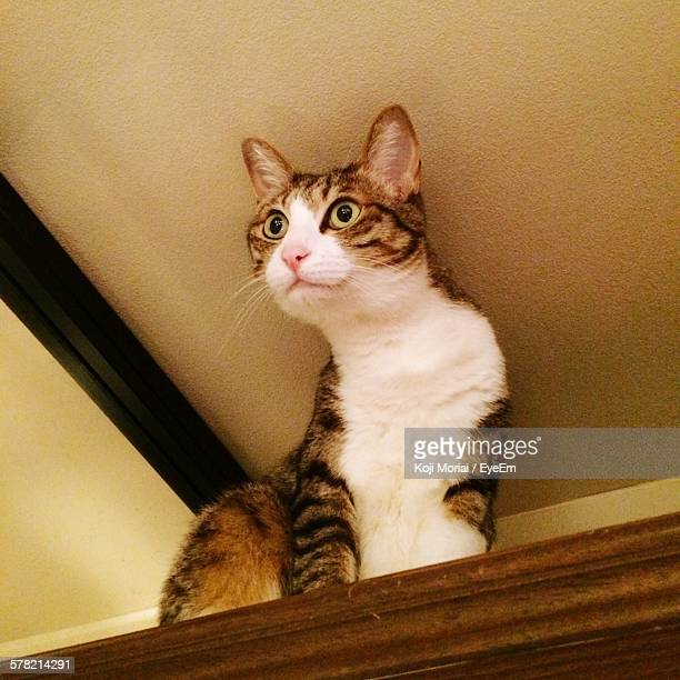 Low Angle View Of Cat On Shelf