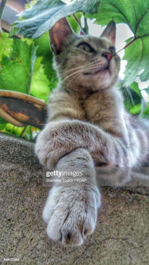 Low angle view of cat : Stock Photo