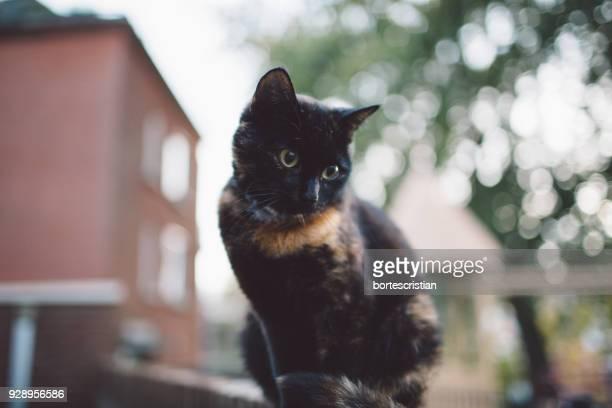 low angle view of cat - cristian neri foto e immagini stock