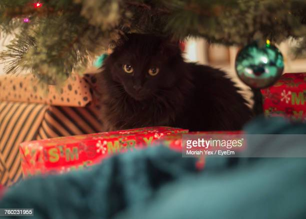 low angle view of cat sitting by illuminated christmas tree at home - Black Cat Christmas Tree
