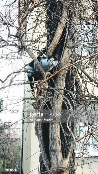 Low Angle View Of Cat Sitting On Bare Tree
