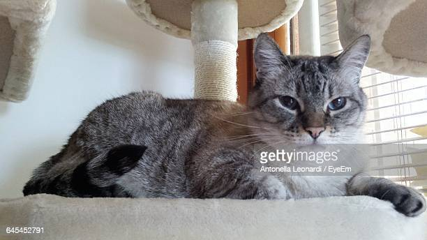 Low Angle View Of Cat Sitting On Table At Home
