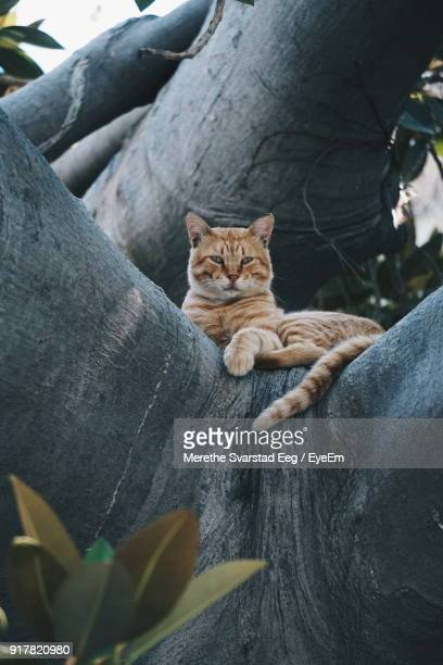 Low Angle View Of Cat Sitting On Tree