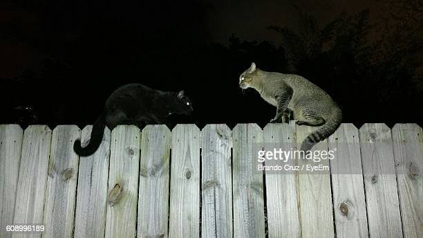 Low Angle View Of Cats On Fence At Night