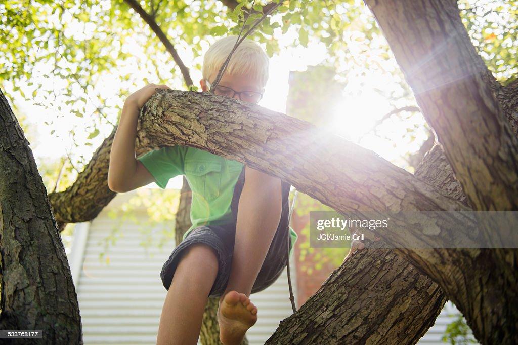 Low angle view of Caucasian boy climbing tree : Foto stock
