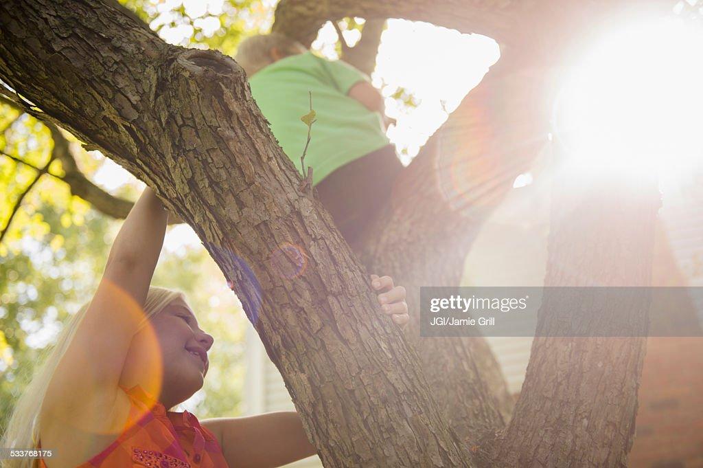 Low angle view of Caucasian children climbing tree : Foto stock