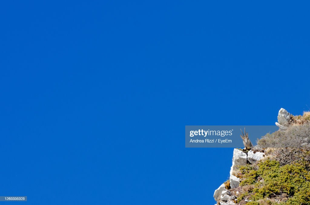 Low Angle View Of Chamois On Rock Against Clear Blue Sky : Foto stock