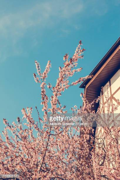 low angle view of cherry blossom tree by house against sky - albrecht schlotter stockfoto's en -beelden