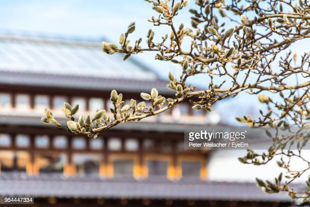 low angle view of cherry blossoms on building against sky - weilacher stock-fotos und bilder