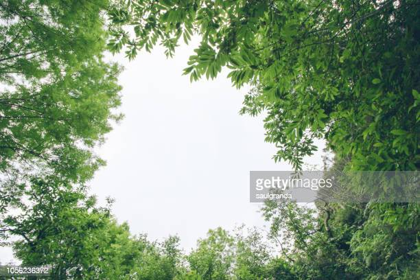 low angle view of chestnut and ash trees against overcast sky - treetop stock pictures, royalty-free photos & images