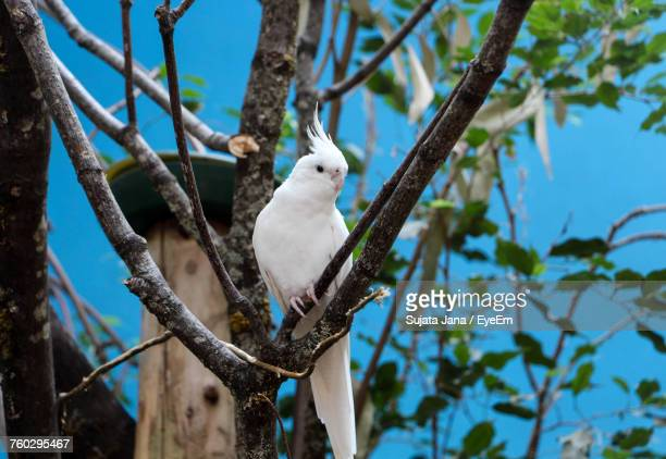 Low Angle View Of Cockatoo Perching On Branch Against Sky