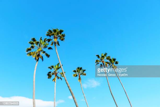low angle view of coconut palm tree against blue sky - los angeles stock pictures, royalty-free photos & images