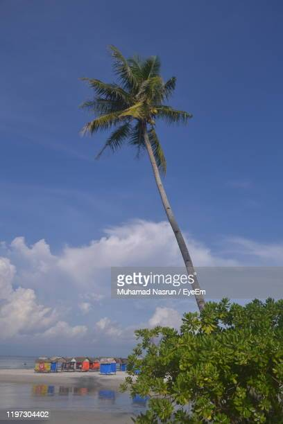 low angle view of coconut palm tree against sky - muhamad nasrun stock pictures, royalty-free photos & images