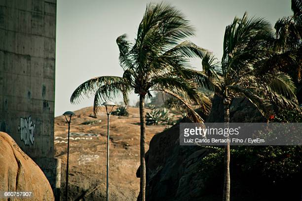 low angle view of coconut palm trees - filho stock pictures, royalty-free photos & images