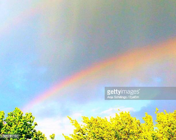 Low Angle View Of Colorful Rainbow Above Trees