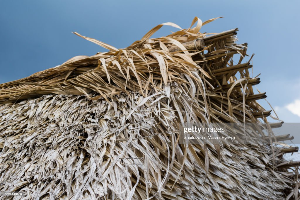 Low Angle View Of Corn Against Sky : Stock Photo