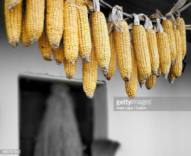 Low Angle View Of Corns Hanging Outdoors