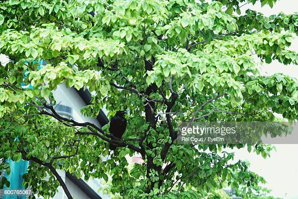 Low Angle View Of Crow Perching On Branch