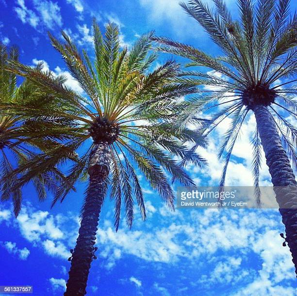 low angle view of date palm tree against sky - date palm tree stock pictures, royalty-free photos & images